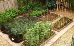 Новые идеи для дачи и сада