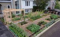 Интересные идеи для дачи и сада